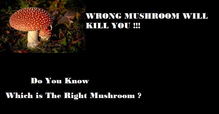 Mushrooms poisonous