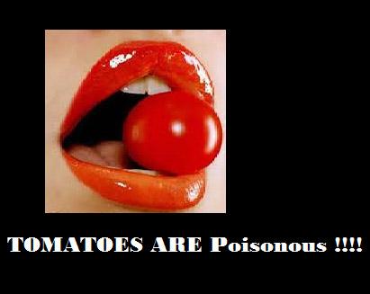 tomato poisonous
